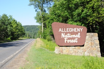 Allegany National Forrest